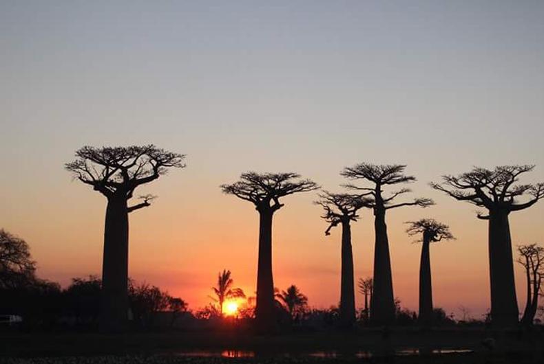 L'ESSENTIEL DE MADAGASCAR EN CIRCUIT